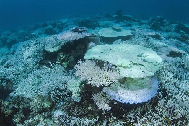 Le blanchissement des coraux s'intensifie aux Seychelles