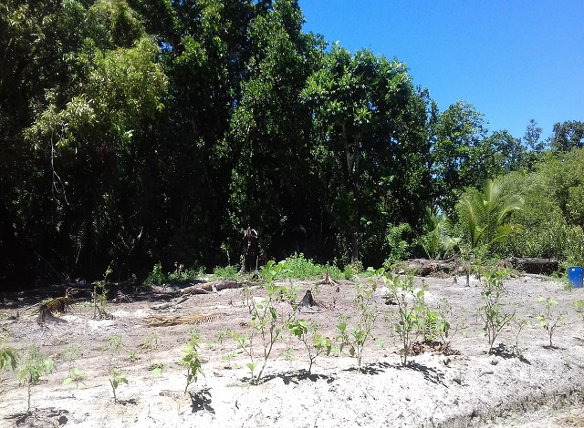 Seychelles goes into agroforestry, merging food production with conservation