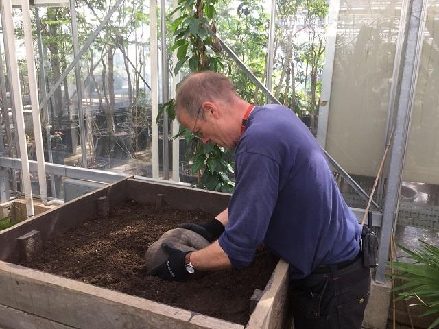 Les jardins botaniques royaux de Kew au Royaume-Uni vont cultiver un autre coco-de-mer endémique des Seychelles