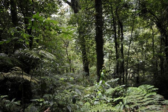 World nears 2020 goal of restoring degraded forests