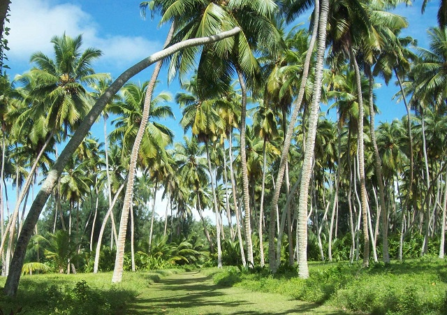 9 parts of the coconut tree used in Seychelles