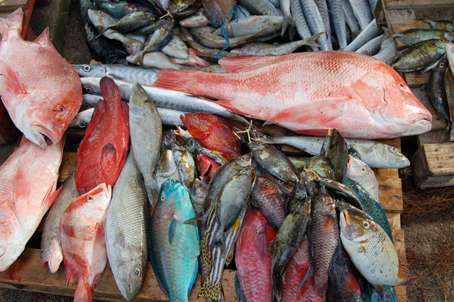 Les Seychelles évaluent l'état du stock de poissons  avec un nouveau projet de marquage en 2017