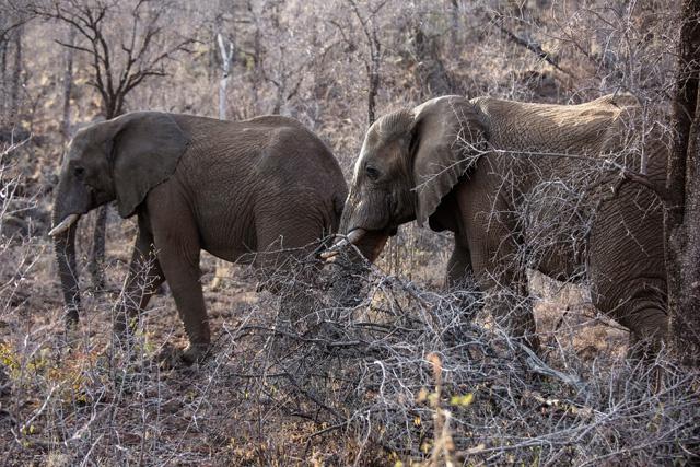 Humanity decimating planetary wildlife: report