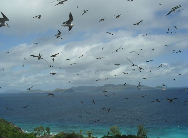 Annual seabirds census on Seychelles' island of Aride confirms highest population of lesser noddies