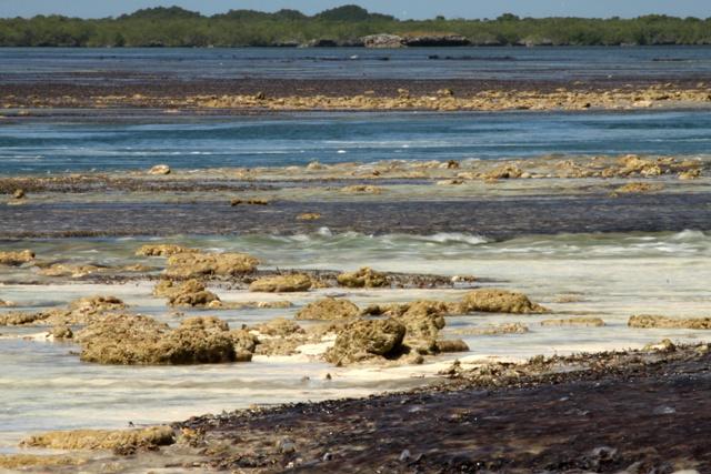 Rythmé par les marées: l'atoll d'Aldabra aux Seychelles obtient sa propre application de marée