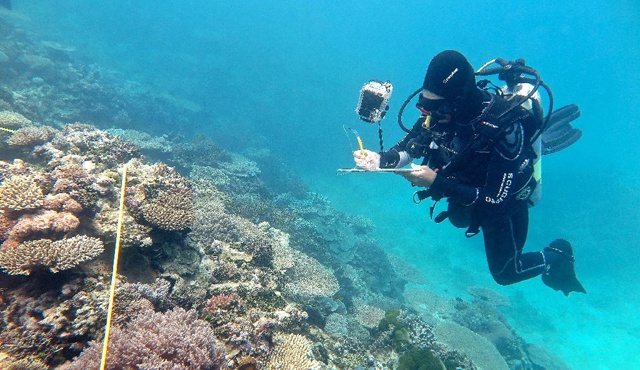 Record coral kill-off on Great Barrier Reef