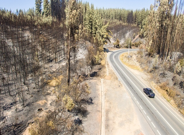 More than 40 detained in Chile for spreading forest fires