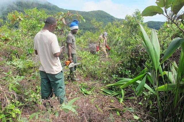 Une étude de référence aux Seychelles donne de l'espoir quant à la restauration des communautés de plantes indigènes