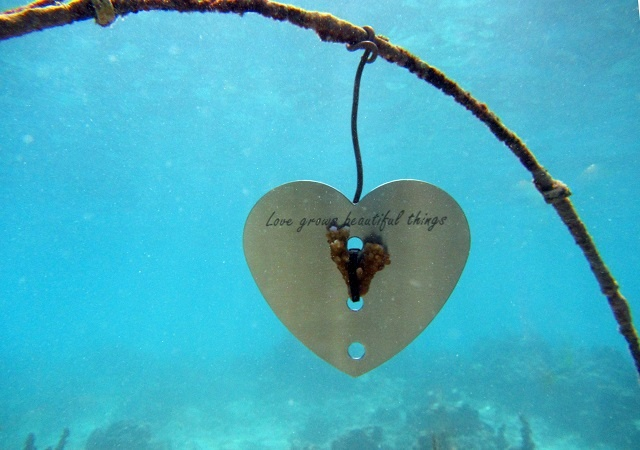 Valentine's Day island activity: 'Love Grows Beautiful Things'