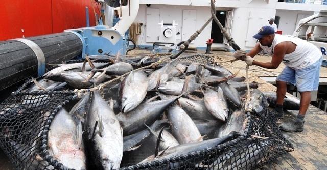 Les Maldives expriment leur désaccord avec la position des Seychelles visant à réduire les prises de thon