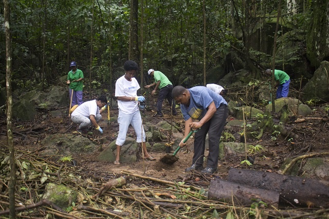 Seychelles plants 400 palm trees as part of Queen's Commonwealth Canopy initiative
