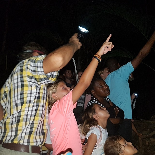 Popular island safari: Night-time expedition shows Seychelles' endemic palm forest