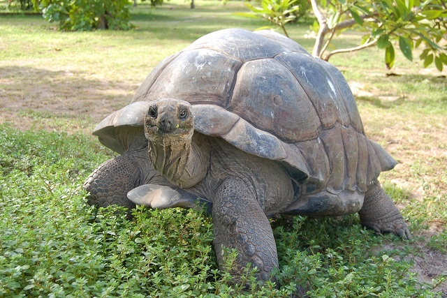Seychelles' giant tortoises to feature at Venice art exhibition