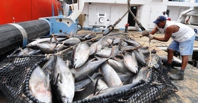 Les pays membres d'un organisme régional acceptent la proposition des Seychelles concernant la restriction des captures de thon