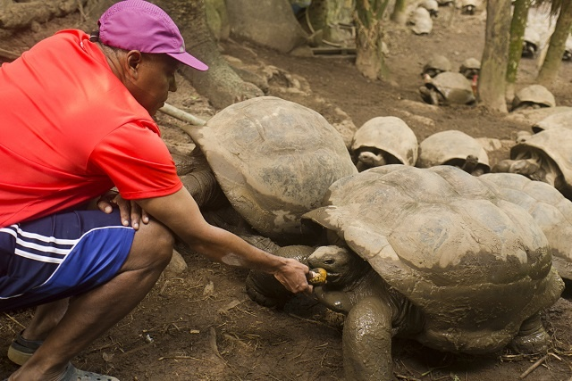 A sanctuary for breeding tortoises is the goal for Seychellois entrepreneur