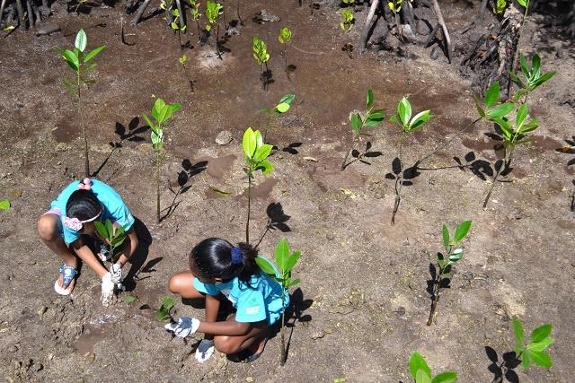 Le miracle de la mangrove doit être protégé et des moyens de sensibilisation créés, déclare un complexe hôtelier aux Seychelles.
