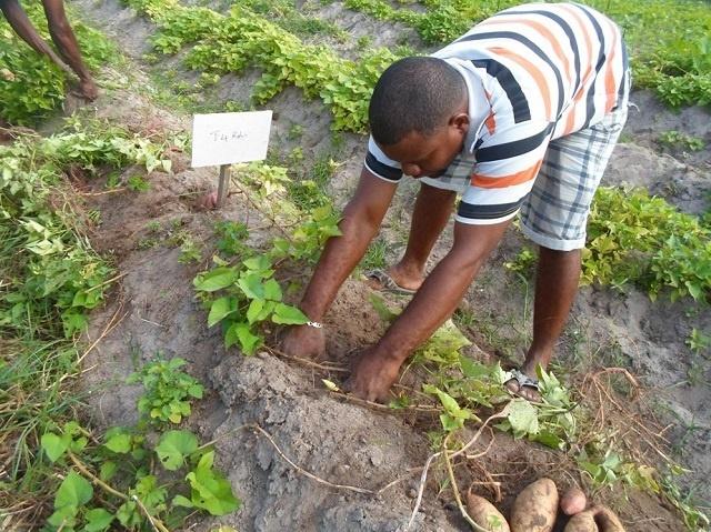 Les Seychelles veulent augmenter la production agricole, en dépendant moins sur les importations