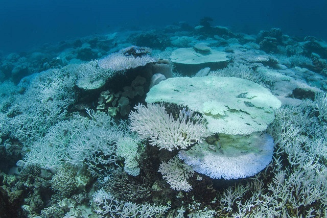 4 projects in Seychelles to help coral reefs survive