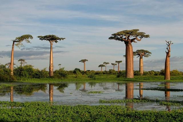 Les personnes qui se sont rendues à Madagascar, où sévit la peste, seront placées en isolation en arrivant aux Seychelles