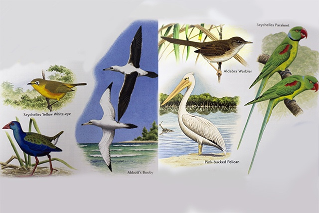 6 extinct birds once found in Seychelles