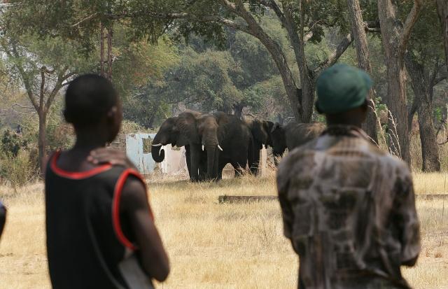 Critics hit US over elephant trophy imports