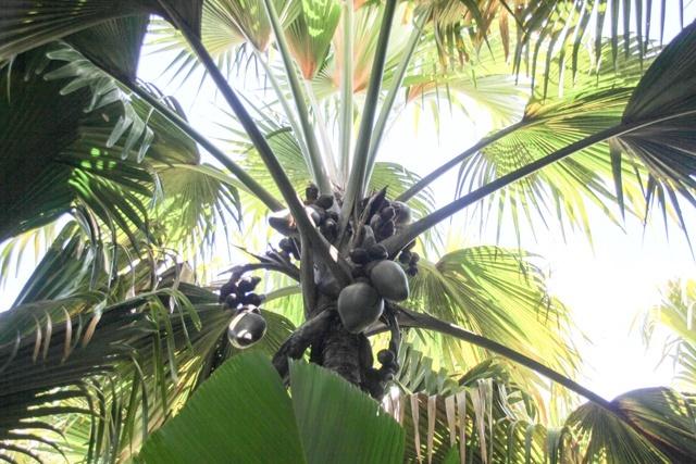 2 sites de conservation aux Seychelles jugés généralement bons par un organisme international de conservation