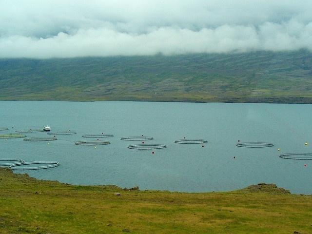 L'ouverture de l'installation aquaculture en août assurera du poisson tout au long de l'année aux Seychelles