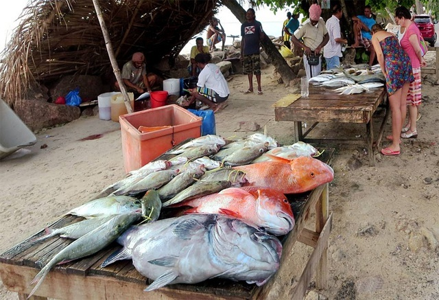 Benefits of fish consumption overcome negative mercury effects, Seychellois scientist says