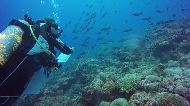Le Corail fait son retour sur Aldabra aux Seychelles, mais le nombre de poissons baisse