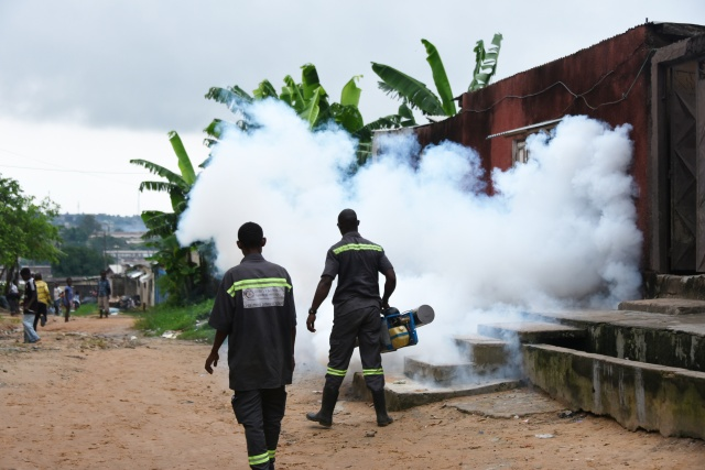 Sterilised mosquito trial slashes dengue-spreading population