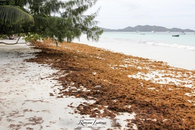 Ministry of Environment alarmed over new algae in Seychelles