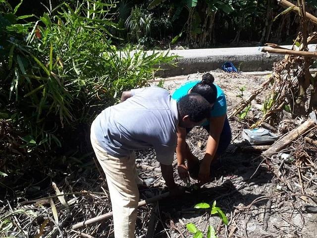7 500 arbres plantés sur l'île de Praslin aux Seychelles afin de prévenir l'érosion et la dégradation des sols