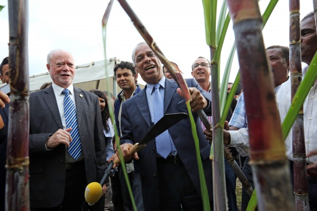 In Mauritius, sugar cane means money, renewable energy