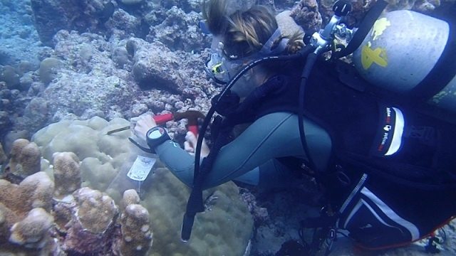 PhD student studying Seychelles and region's coral larvae and coral connectivity