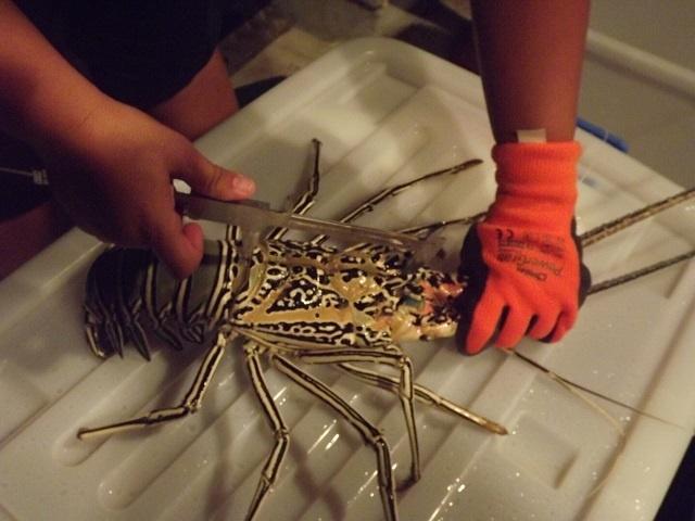 Pas de langoustes des Seychelles, cette année en raison du braconnage et de la diminution de la population
