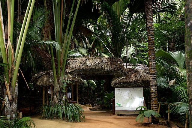 Seychelles' Vallee de Mai, home of world's largest nut, marks 35 years as World Heritage Site
