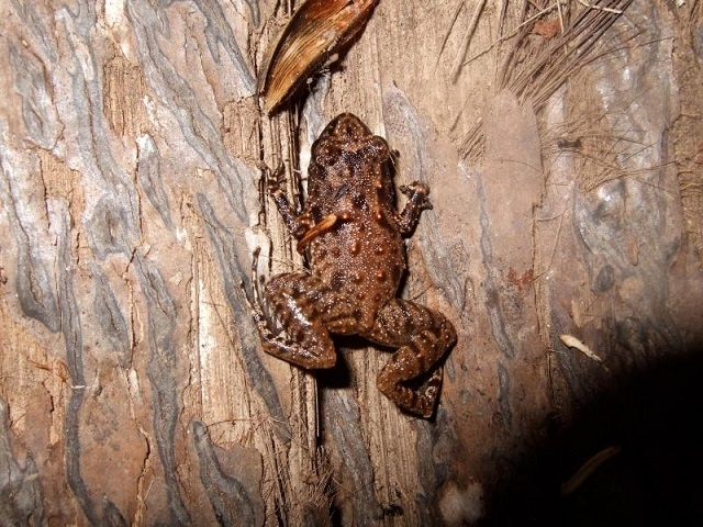 Environmentalists call for better management of Seychelles' amphibians