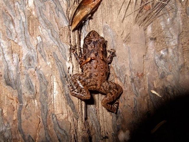 Les environnementalistes appellent à une meilleure gestion des amphibiens des Seychelles
