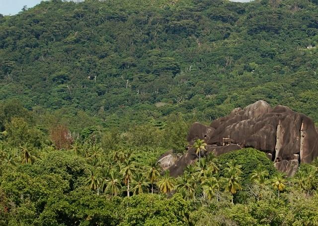 Un nouveau projet de la FAO soutien la gestion durable des forêts et le renforcement des capacités en bioénergie aux Seychelles