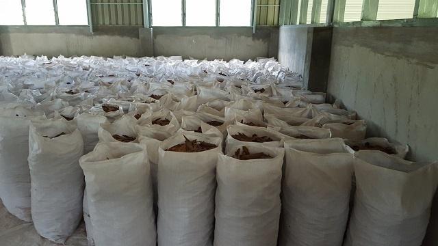 La météo clémente a permis une augmentation de la production de cannelle aux Seychelles