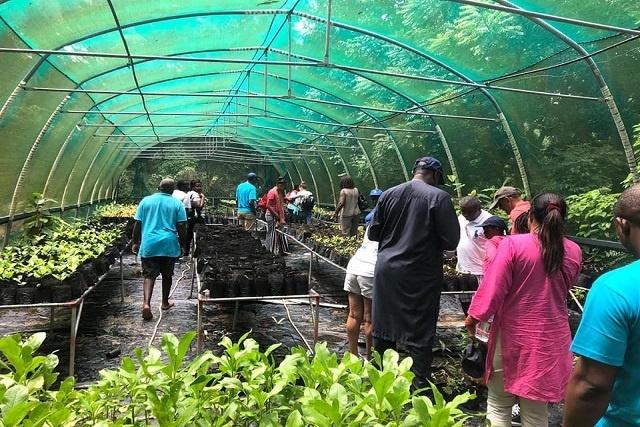TRASS Seychelles a 10 ans et produit 15 000 arbres par an dans les îles