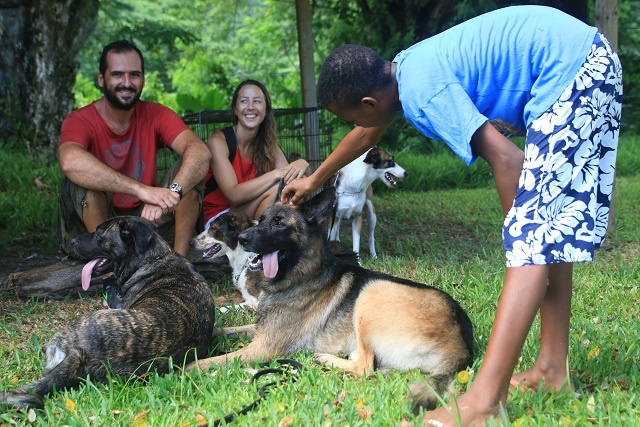 New law in Seychelles protects dogs, seeks to prevent strays beginning in September