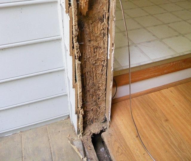 Les Seychelles examinent de près les importations de bois suite à une infestation de termites