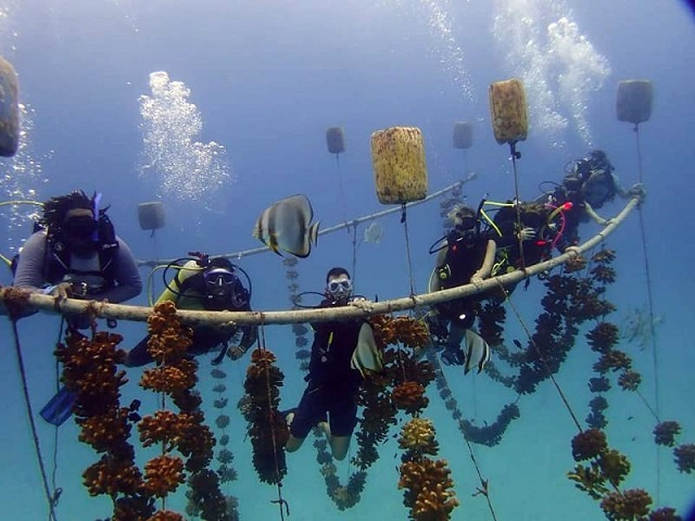As coral becomes increasingly threatened, Seychelles helps six countries practice coral restoration