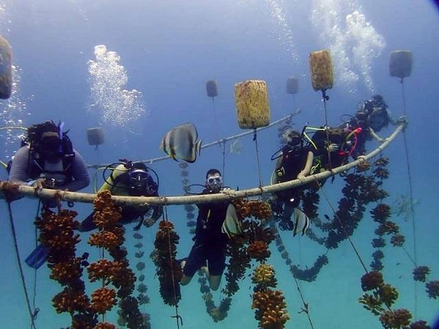 Alors que le corail devient de plus en plus menacé, les Seychelles aident six pays à mettre en œuvre la restauration du corail