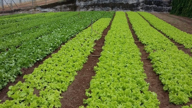 Free land being given to graduating farm students to boost food production in Seychelles