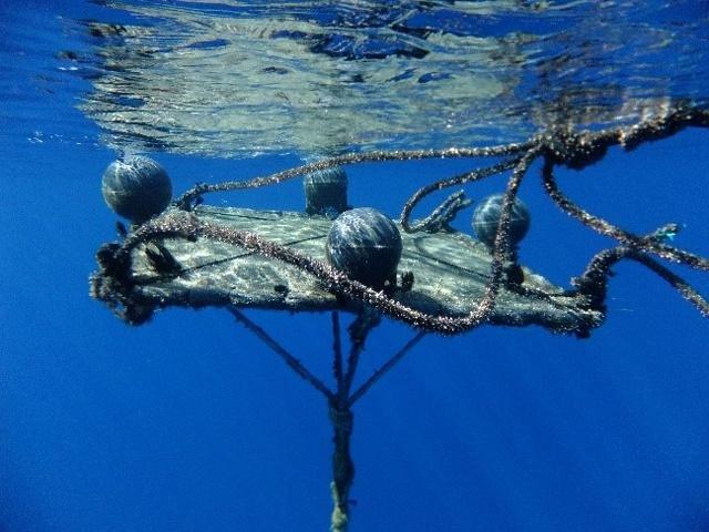 La Commission des thons de l'océan Indien adopte des mesures proposées par les Seychelles pour réduire les déchets marins et les dommages causés aux récifs