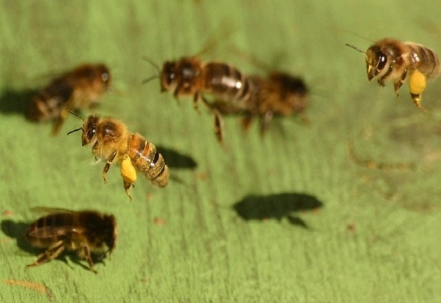 In a bid to protect bees, Seychelles adopts environmentally friendly pesticides