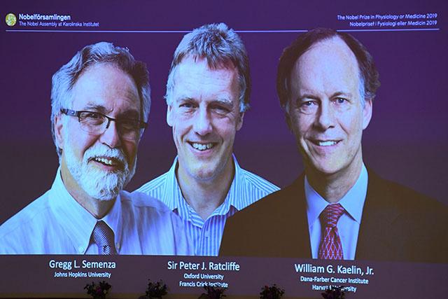 Le Nobel de médecine à des travaux sur l'adaptation du corps aux niveaux d'oxygène