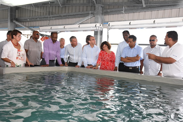 Industrial aquaculture begins in Seychelles as broodstock, acclimation and quarantine facility opens